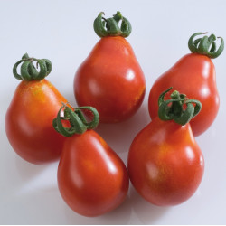 Tomate Poire rouge