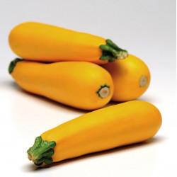 Courgette jaune Orellia